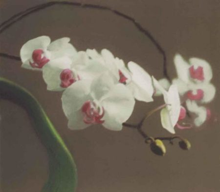 Orchidee I (Orchid I)-1998