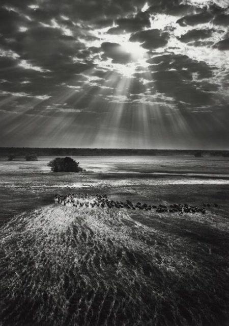 Sebastiao Salgado-Kafue National Park, Zambia-2010