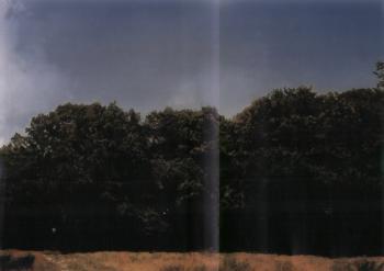 Gerhard Richter-Baume (Trees)-1987