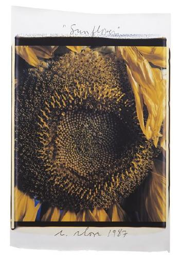 Chuck Close-Sunflower-1987