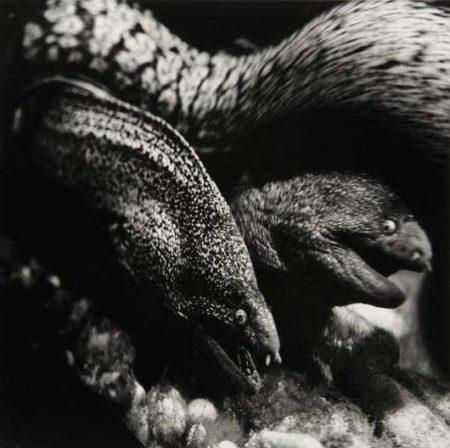 Helmut Newton-Le murenes, Musee Oceanographique de Monaco-1988