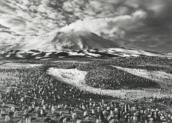 Sebastiao Salgado-Sandwich Islands (Macaroni Penguins, Antarctica)-2009