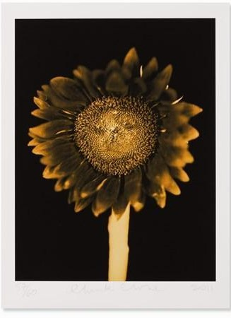 Chuck Close-Sunflower / Untitled-2011