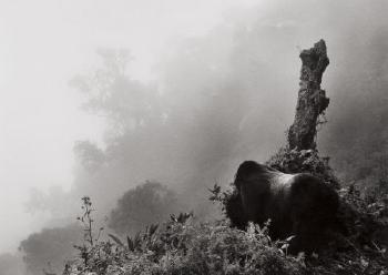 Sebastiao Salgado-Ubumbwe in Mist over the Forest of the Bisoke Volcano, Rwanda-2004