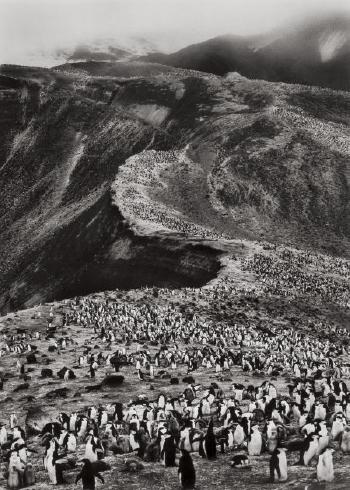 Sebastiao Salgado-Antarctica (Chinstrap Penguins Colony - Pygoscelis Antarctica, Deception Island)-2005