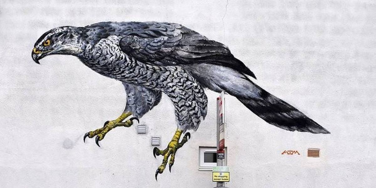 ATM - Goshawk for Colour The Capital, in London