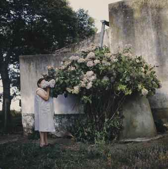 Alessandra Sanguinetti-Hydrangeas (from The Adventures of Guille and Belinda and the Enigmatic Meaning of Their Dreams)-1999