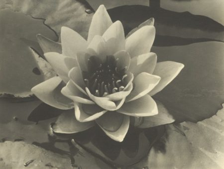 Waterlily-1932