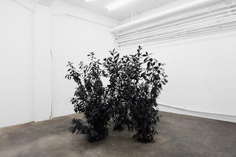 Andrew Dadson - Black Plants, 2013, installation view, RaebervonStenglin, Zurich, photo courtesy of RaebervonStenglin, installation
