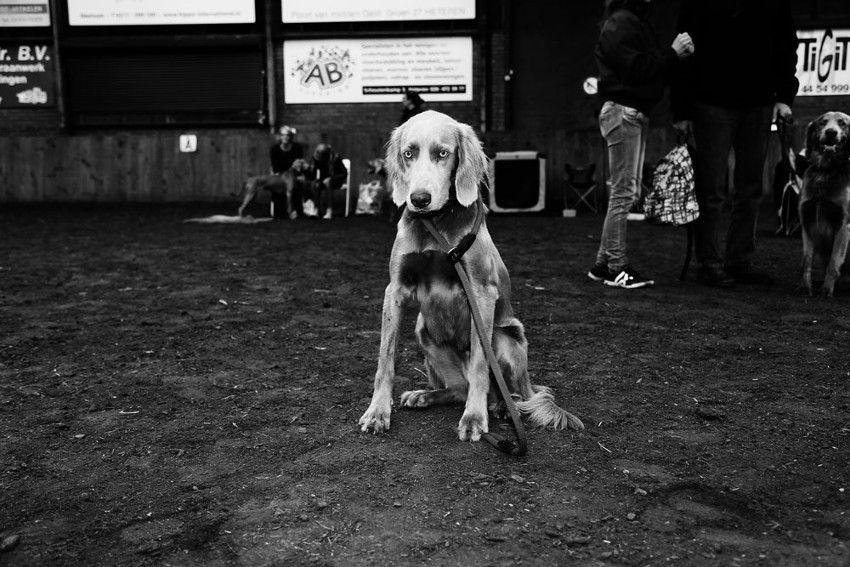 Anne Barlinckhoff - Life's A Dogshow 1, book, dutch, talent, like, free