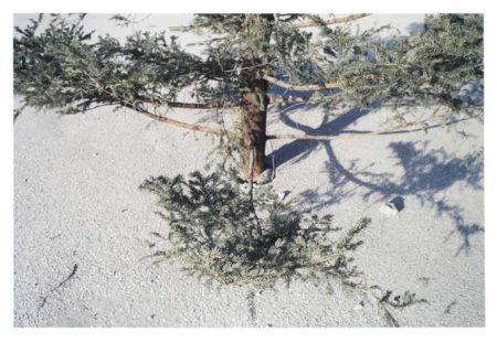 Anri Sala-Christmas Tree-2002