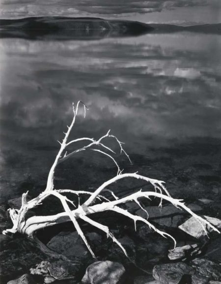 Ansel Adams-White Branches Mono Lake California-1947