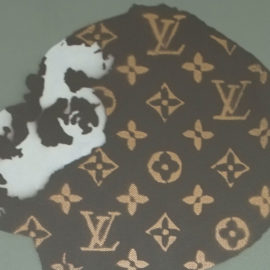 Louis Vuitton Graffiti