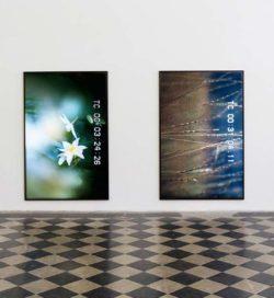 Colin Snapp at Galerie Allen
