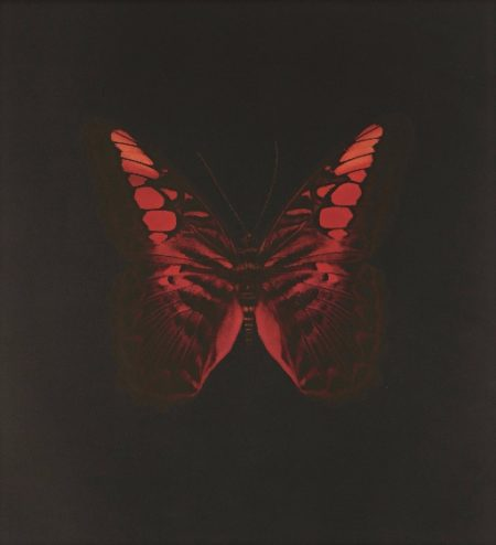Damien Hirst-A Single Unique Butterfly from The Souls On Jacob's Ladder Take Their Flight-2008