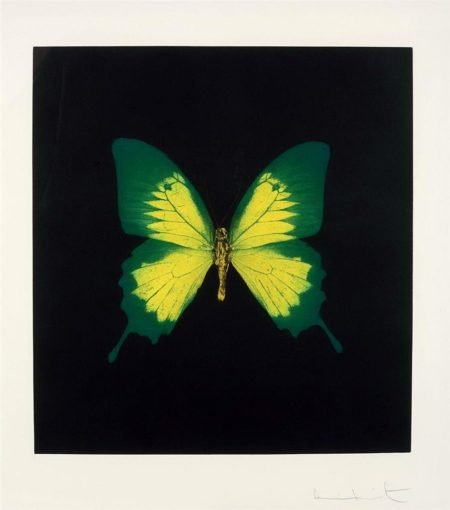 Green Yellow Butterfly from Memento-
