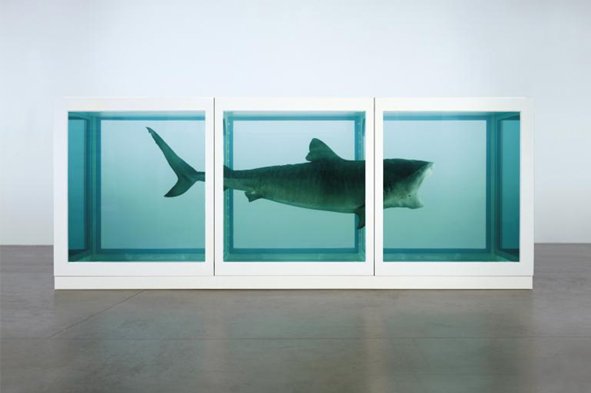 Damien Hirst - The Physical Impossibility of Death in the Mind of Someone Living, 1991 tate terms paintings love exhibitions biography