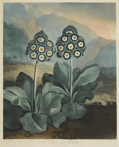 Dr Robert John Thornton-A Group of Auriculas by Sutherland pl. 9 (Second Plate) from The Temple of Flora-1807