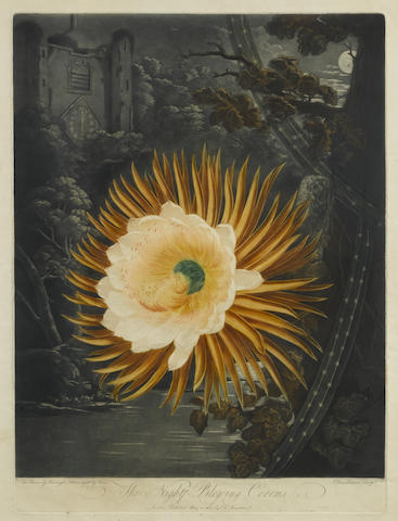 Dr Robert John Thornton-The Night-Blowing Cereus by Dunkarton pl. 14 from The Temple of Flora-1807