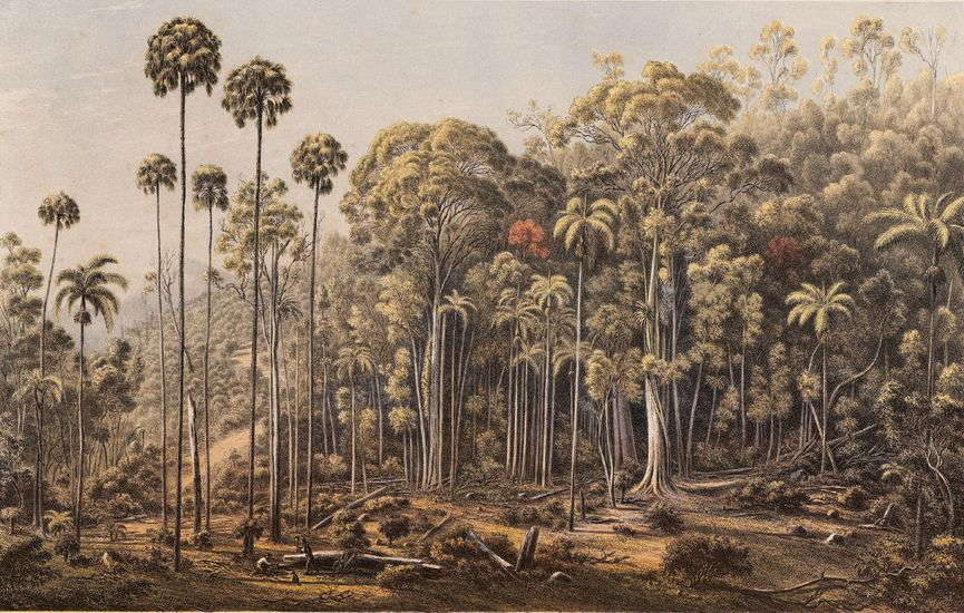 scenery home original canvas page oil design Eugene Von Guerard Cabbage Tree Forest, American Creek