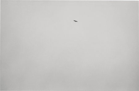 Felix Gonzalez-Torres-Untitled - The Bird Photograph-1994