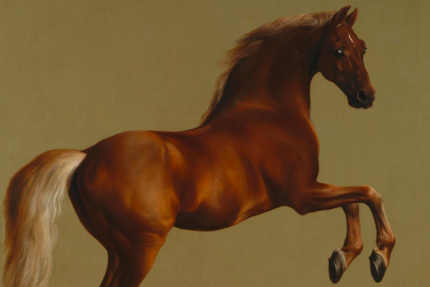 George Stubbs – Whistlejacket, 1762, detail