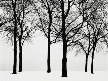 Harry Callahan-Chicago (Trees In Snow)-1950