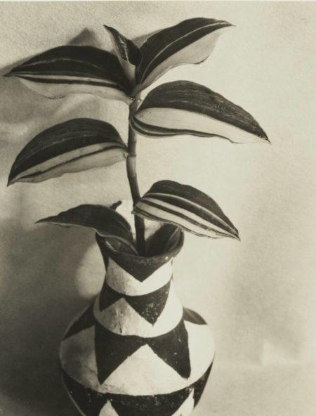 Imogen Cunningham-Wandering Jew-1920