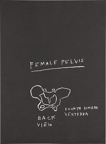 Jean-Michel Basquiat-Anatomy (Female Pelvis, AP)-1982