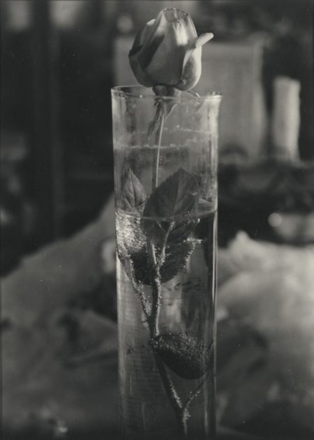 Josef Sudek-Rose In Glass Beaker-1950