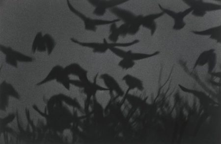 Masahisa Fukase-Kanagawa (From The Solitude Of Ravens)-1978