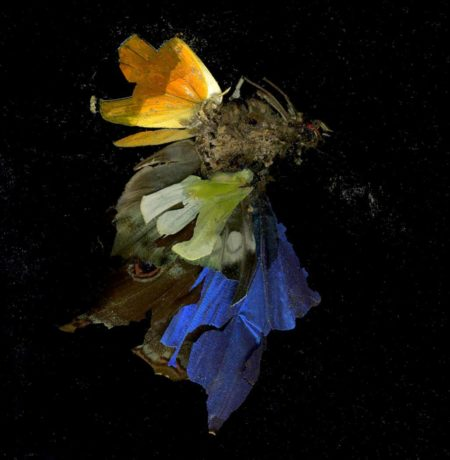 Mat Collishaw-Insecticide 15-2009
