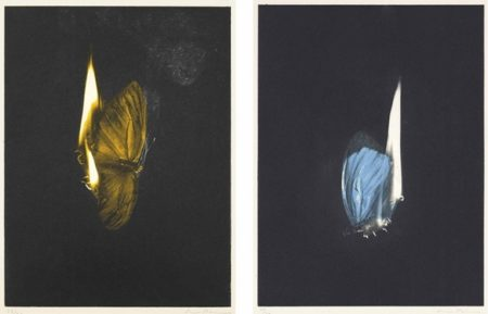 Mat Collishaw-Two Burning Butterflies-2013