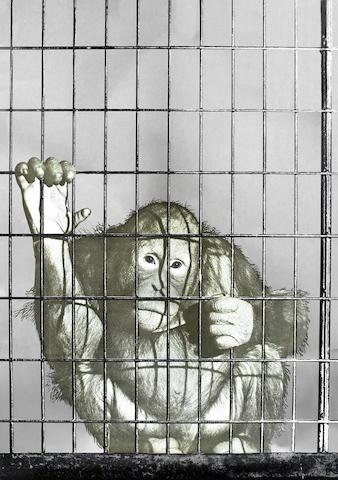 Michelangelo Pistoletto-La Scimmia-1962
