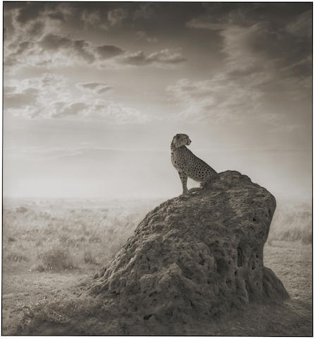 Nick Brandt-Cheetah on Termite Mound, Maasi Mara-2008
