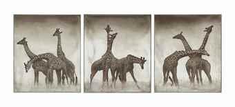 Nick Brandt-Giraffe Triptych, Maasai Mara-2005