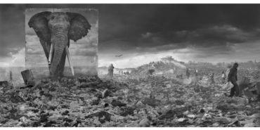 Nick-Brandt-Wasteland-with-elephant-20151