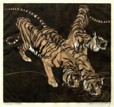 Tigers Drinking-