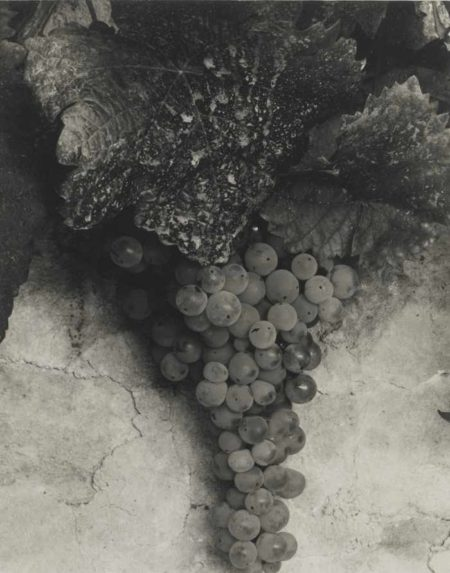 Paul Strand-France (Grapes)-1950