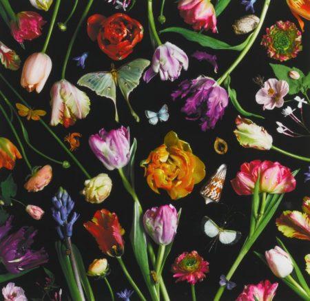 Paulette Tavormina-Botanical VII (Tulips)-2014