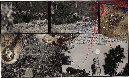 Peter Beard-Buffalos and Eles, Abedares-1978