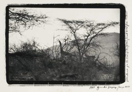 Peter Beard-Gerenuks Grazing Kenya N. F. D.-1960