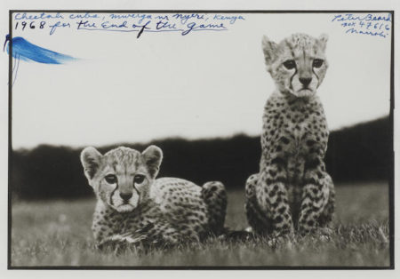 Peter Beard-Orphaned Cheetah Cubs, Mweiga National Park, Kenya, for The End of the Game-1968
