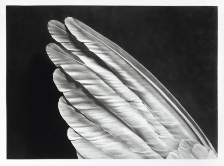 Robert Longo-Untitled (Angel's Wing)-2014