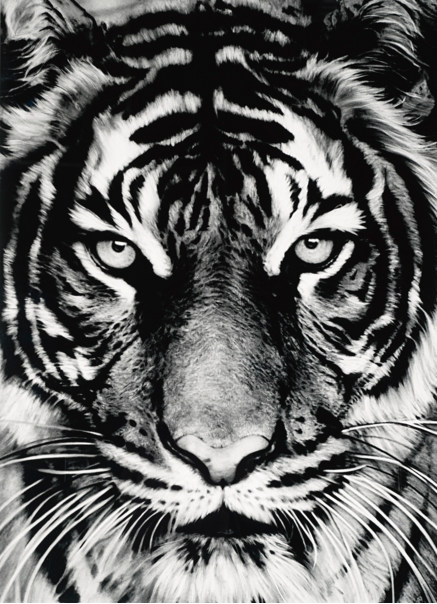 Robert Longo-Untitled (Tiger Head 3)-2011