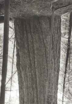 Rodney Graham-Old Growth Cedar (#2) Seymour Reservoir-2002