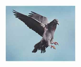 Roe Ethridge-Pigeon-2002