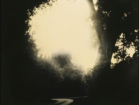Sally Mann-Untitled (Deep South No 20)-1999