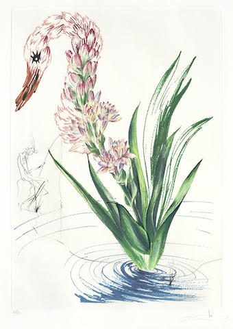 Salvador Dali-Polyanthes Tyberosa et Cygnus vegetalis, from Surrealistic Flowers-1972