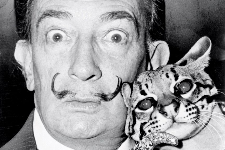 Salvador Dali cat